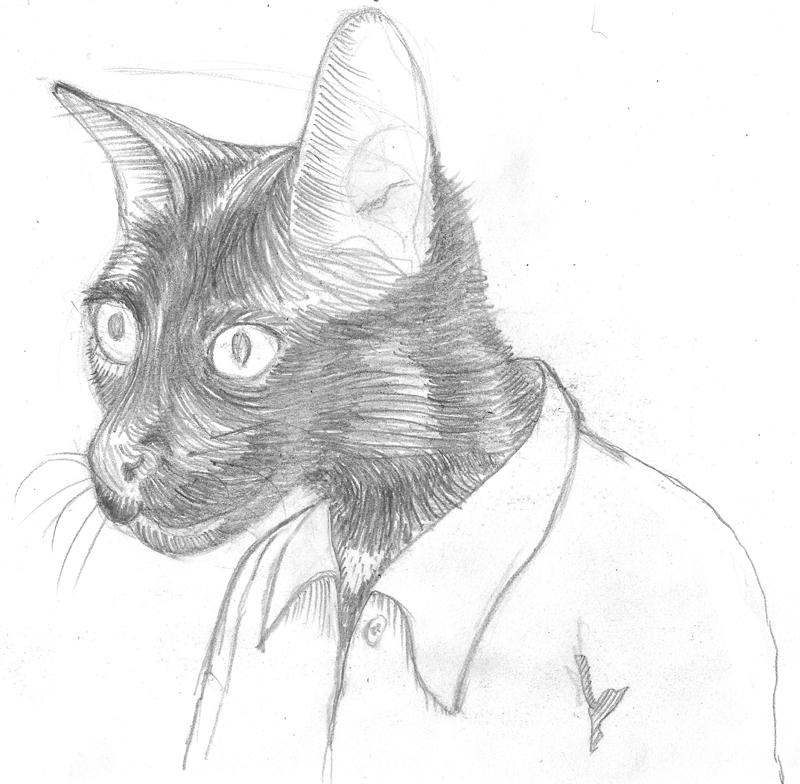 catdessin